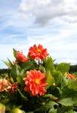 Jardín de flor Imágenes de archivo libres de regalías