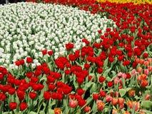 Jardín de flor Foto de archivo libre de regalías