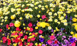 Jardín de flor Imagenes de archivo