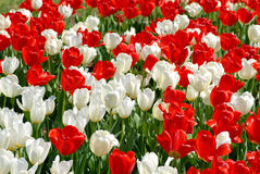 Jardín de flor Foto de archivo