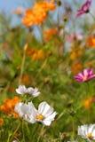 Jardín de flor Fotos de archivo libres de regalías