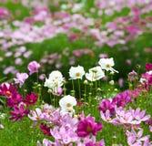 Jardín de flor del verano