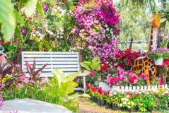 Jardín de flor hermoso Imagenes de archivo