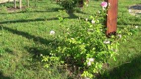 Jardín de florecimiento en primavera en parque almacen de metraje de vídeo