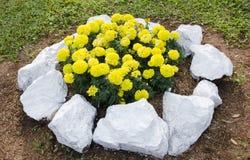 Jardín de flores Imagen de archivo libre de regalías