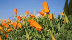 Jardín de flores. imagen de archivo