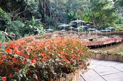 Jardín de flores Foto de archivo libre de regalías