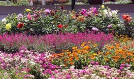 Jardín de flores foto de archivo