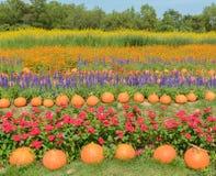 Jardín de flores adornado colorido Fotografía de archivo