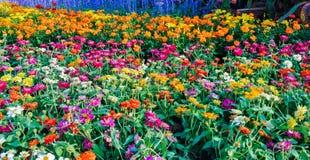 Jardín de flores adornado para la belleza del lugar en Bangkok Tailandia Imagenes de archivo