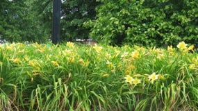 Jardín de flores amarillo Foto de archivo libre de regalías