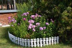 jardín de flores Bien-adornado Fotos de archivo libres de regalías
