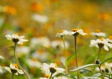 Jardín de flores blancas Imagenes de archivo