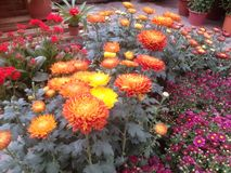 Jardín de flores colorido Imagen de archivo