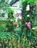 Jardín de flores colorido de la orquídea Fotos de archivo