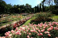 Jardín de flores colorido en Mae Fah Luang, Chiang Rai, Tailandia fotos de archivo