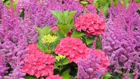Jardín de flores colorido hermoso con las diversas flores Foto de archivo libre de regalías