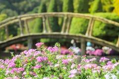 Jardín de flores con el puente de madera arqueado en el fondo Imágenes de archivo libres de regalías