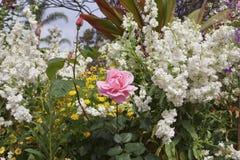 Jardín de flores con las flores de la mezcla fotografía de archivo libre de regalías