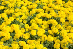 Jardín de flores 2 de la maravilla Imagen de archivo