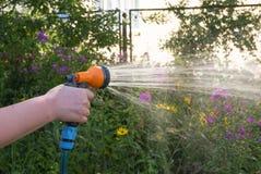 Jardín de flores de riego del verano con una ducha ajustable Foto de archivo