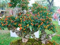 Jardín de flores del festival de primavera en año lunar Imagen de archivo libre de regalías