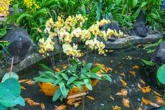 Jardín de flores del festival de primavera en año lunar Foto de archivo