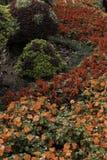 Jardín de flores del flor de la seta Imágenes de archivo libres de regalías