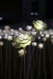 Jardín de flores del LED Imagenes de archivo