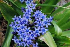 Jardín de flores del tiempo de primavera Fotos de archivo libres de regalías