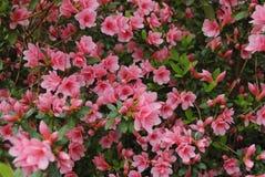 Jardín de flores del tiempo de primavera Imágenes de archivo libres de regalías
