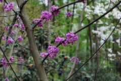 Jardín de flores del tiempo de primavera Foto de archivo libre de regalías