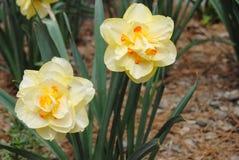 Jardín de flores del tiempo de primavera Imagenes de archivo