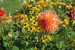 Jardín de flores del verano Imagen de archivo libre de regalías