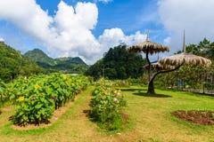 Jardín de flores en el AMI agrícola real de Angkhang Chaing de la estación Fotos de archivo