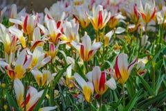 Jardín de flores en el parque Fotos de archivo