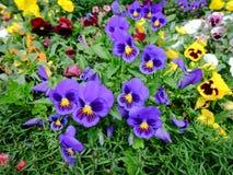 Jardín de flores en el parque de la ciudad Fotografía de archivo libre de regalías