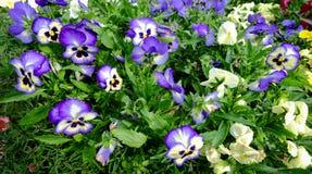 Jardín de flores en el parque de la ciudad Fotos de archivo libres de regalías