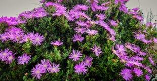 Jardín de flores en el parque de la ciudad Imágenes de archivo libres de regalías
