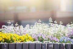 Jardín de flores en Japón Fotos de archivo libres de regalías
