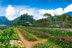 Jardín de flores en la estación agrícola real Angkhang Fotos de archivo libres de regalías