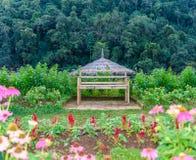 Jardín de flores en la estación agrícola real Angkhang Fotos de archivo