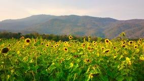 Jardín de flores en la granja de Maehae en el chiangmai Tailandia Imagen de archivo libre de regalías