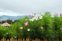 Jardín de flores en la montaña Imagen de archivo