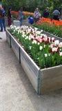 Jardín de flores en Toronto Fotografía de archivo libre de regalías