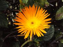 Jardín de flores exótico anaranjado Imagen de archivo libre de regalías