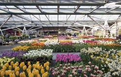 Jardín de flores famoso en Holanda Foto de archivo libre de regalías