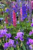 Jardín de flores hermoso cerca de Salem Oregon imagen de archivo