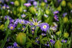Jardín de flores hermoso con las flores florecientes coloridas Fotografía de archivo libre de regalías