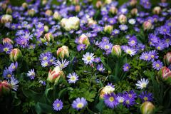 Jardín de flores hermoso con las flores florecientes coloridas Fotografía de archivo